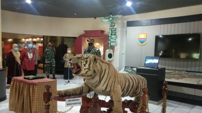 Brigjen TNI M Zulkifli Serahkan Offset Harimau Sumatera Hasil Sitaan 2007 Lalu ke Museum Siginjei
