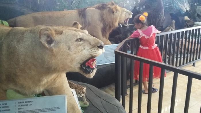 GALERI FOTO: Lihat Offset Hewan Buas di Kebun Binatang Taman Rimba