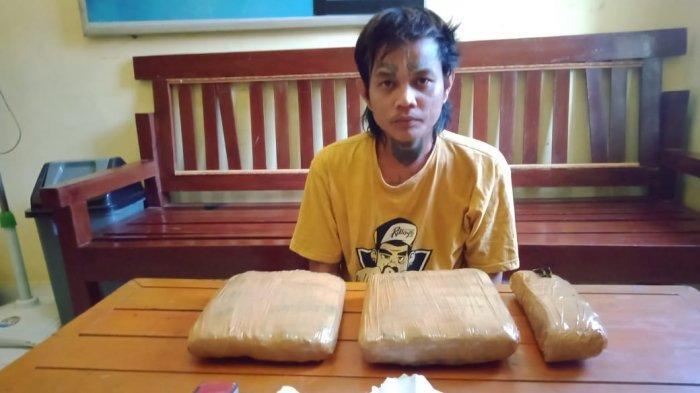 BREAKING NEWS Satresnarkoba Polres Tebo Amankan Pemilik 2,4 Kilo Ganja Kering Warga Muarojambi
