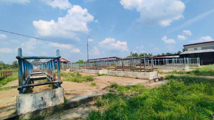 Dewan Soroti Pemanfaatan Pasar Ternak Batanghari, Pedagang Terpaksa Menginap di Musala
