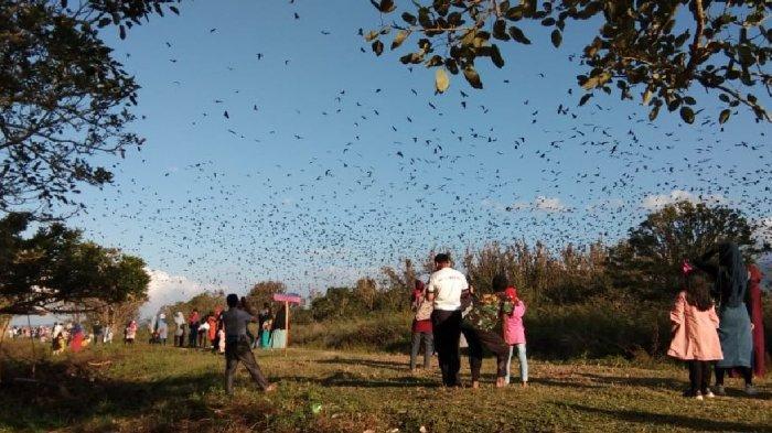 WIKIJAMBI - Berbagi Kebahagiaan dengan Ribuan Kelelawar di Pulau Kelelawar Nan Eksotis di Kerinci