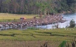 Demi Dapat Kompensasi Rp 15 Juta, Warga Buat Ahan di Sungai Batang Merangin