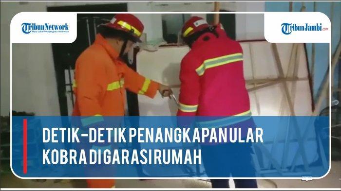 Ular Kobra Masuk Garasi Warga di Sarolangun, Tim Rescue Damkar ImbauHati-hati saat Musim Hujan