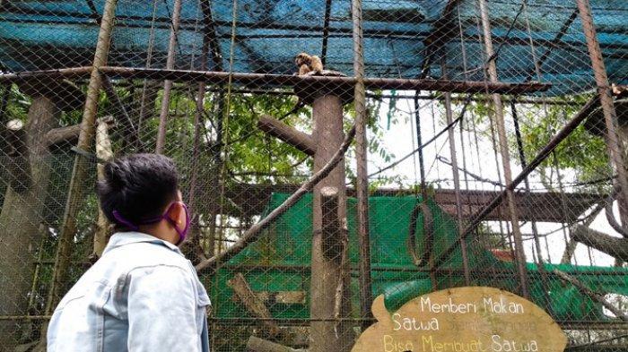 Pengunjung di Taman Rimba, Kota Jambi