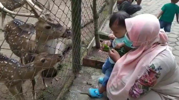 Objek Wisata Melihat Satwa di Dua Kebun Binatang, Jadi Tempat Ngabuburit Asyik di Kota Jambi