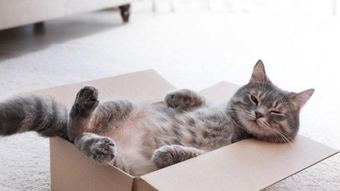 Viral Bocah Ini Tetap Sayang Kucing Peliharaan Meski Mukanya Penuh Luka Cakar, Sang Ibu Bilang Ini