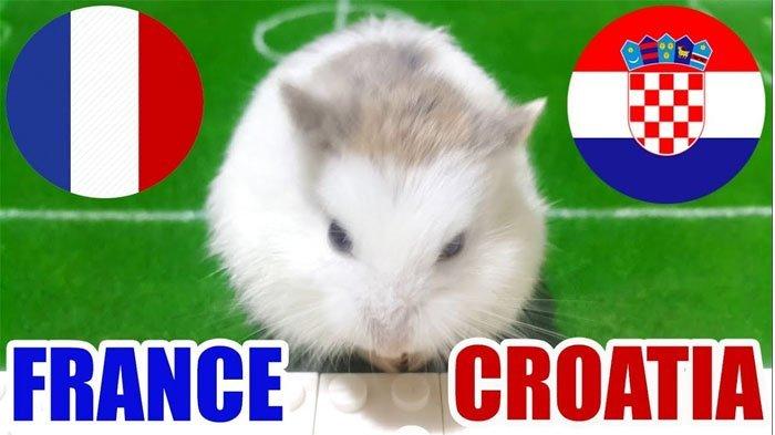 Prediksi Hasil Final Piala Dunia 2018, Perancis Vs Kroasia Versi Hamster Imut Ini, Percaya?