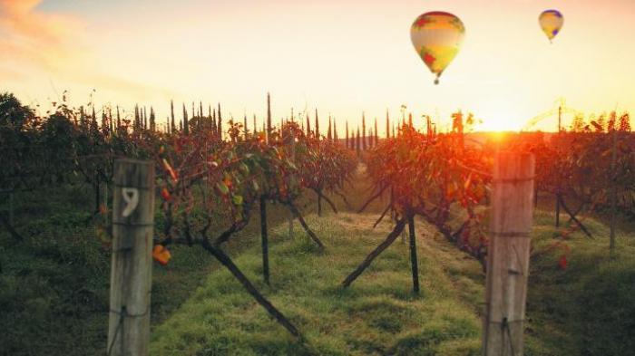 FOTO: Tak Cuma Sekadar Dapat Cicipi Anggur Terbaik di Dunia