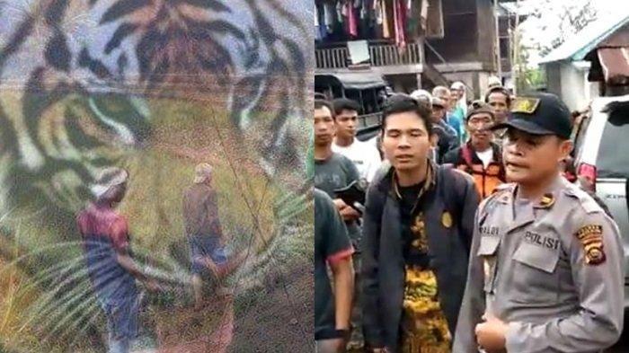 Satu Orang Diterkam Harimau Sampai Tewas, Warga Lakukan Evakuasi Harus Ditemani Satu TNI atau Polisi