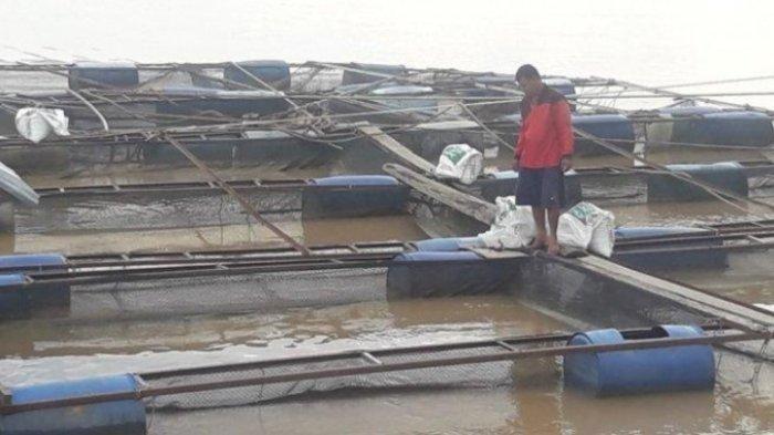 Produksi Ikan Patin di Kumpeh Muarojambi Capai 8 Ton Sehari, Petani Keluhakan Harga Jual Rendah