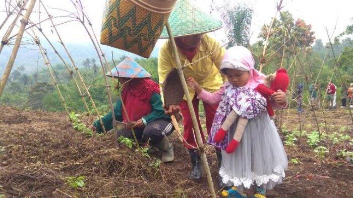 656 Petani di Jangkat Upaya Selamatkan Taman Nasional, Ini yang Dilakukan di TNKS