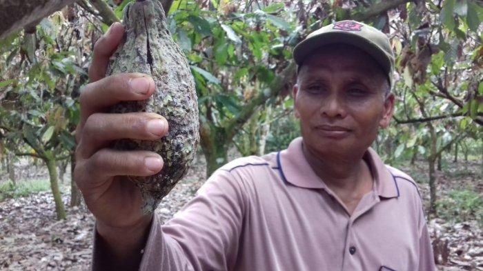 Cara Menurunkan Kolesterol Menggunakan Kakao dan Teh Hijau