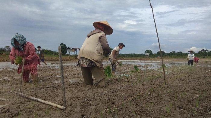 Nasib Petani Tak Kunjung Membaik, Harapan Untuk Calon Pemimpin di Pilkada Serentak Provinsi Jambi