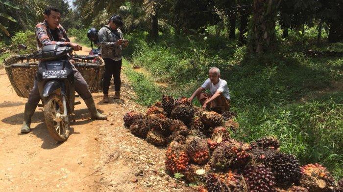 Provinsi Jambi Masih Kekurangan Pabrik Kelapa Sawit