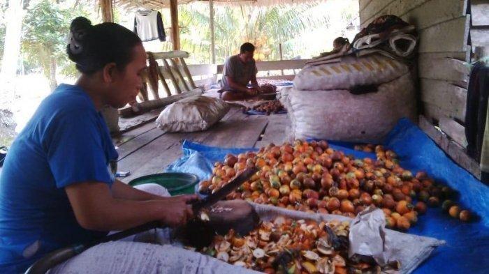 Harga Pinang Turun, Pengepul di Tanjab Timur Merugi Karena Petani Minta Harga Tinggi