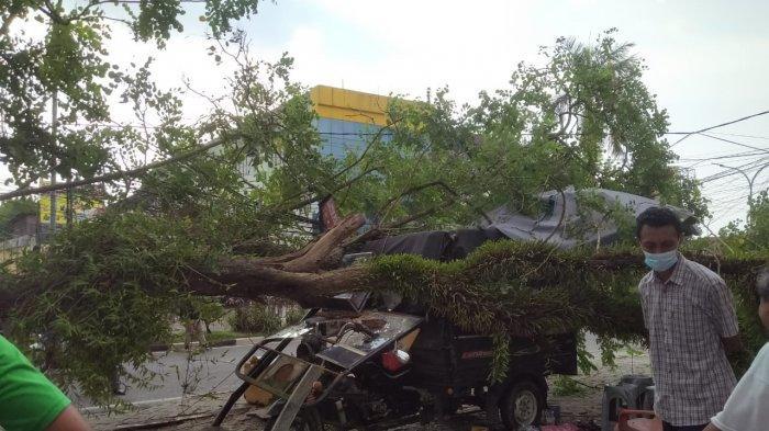 Pohon Tumbang di Kawasan Broni Nyaris Timpa Pedagang Es Tebu, Sepeda Motor Roda 3 Rusak Parah