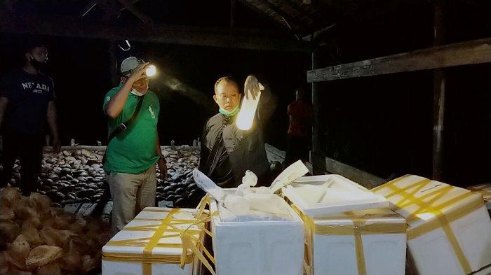 Update Perburuan Penyeludup Baby Lobster oleh Polres Tanjab Barat, Ngeri