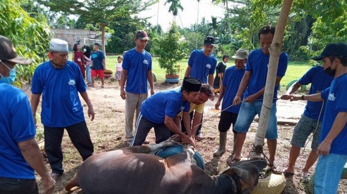 31 Ekor Hewan Kurban Disiapkan Pemkab Tanjung Jabung Timur Untuk Dipotong