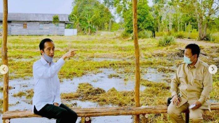 Food Estate di Provinsi Jambi Bakal Garap 6.000 Hektare di Tiap Kabupaten Pelaksana