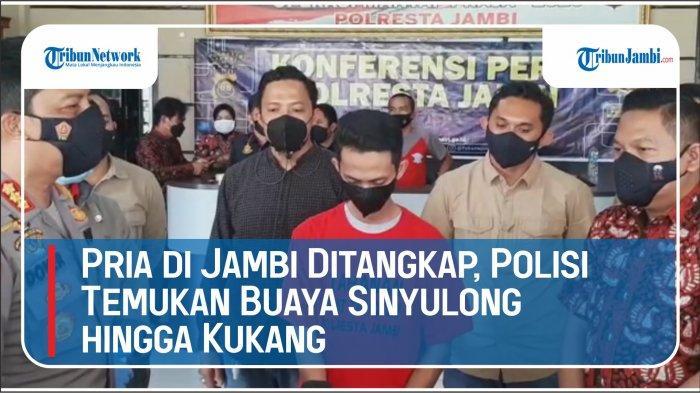 Pria di Jambi Ditangkap Setelah Polisi Temukan Buaya Sinyulong Hingga Kukang