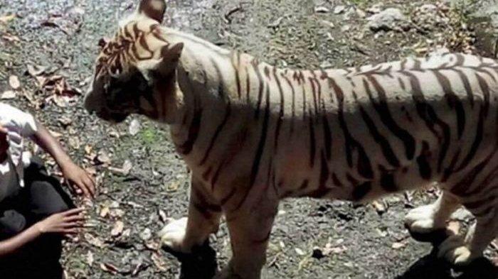 FOTO: Berikut Kumpulan Detik-detik Hewan yang Dikenal Buas Menyerang Manusia
