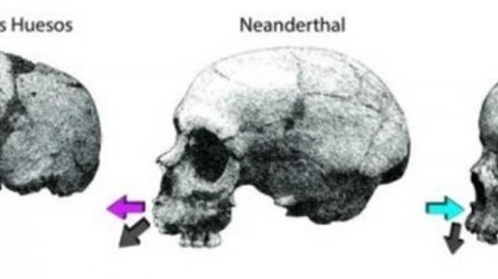 Cek Tulang Wajahmu Mirip yang Mana, Pertumbuhan Wajah Neanderthal-Manusia Modern