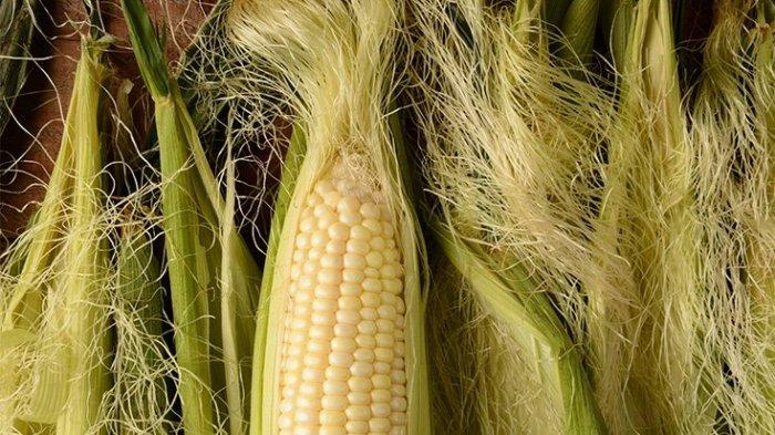 Keajaiban Rambut Jagung yang Ampuh Menurunkan Kolesterol