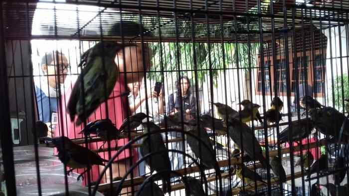 Amankan 340 Ekor Burung Dilindungi Hari Ini Bksda Jambi Bakal Lepas Liarkan Di Hutan Halaman All Tribunjambi Com