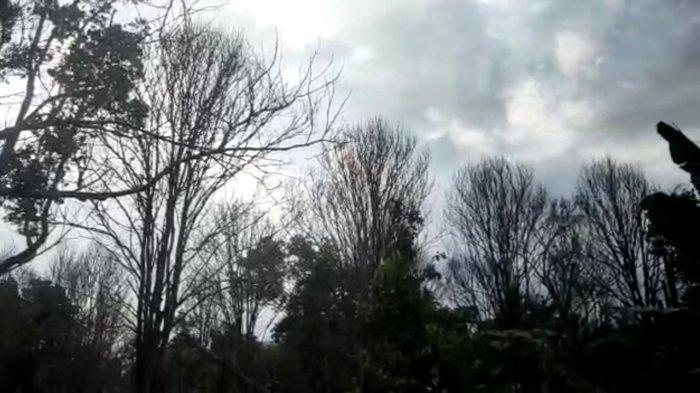 Ratusan Pohon Duku Warga Talang Babat Tanjabtim Mati Diduga Terserang Virus