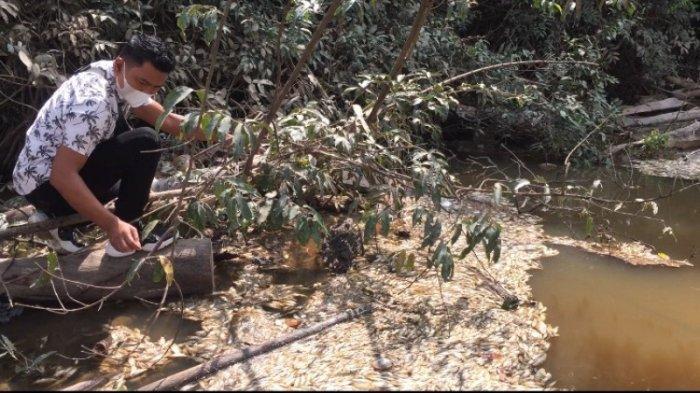 Spot Mancing di Sungai Kampung Tengah Tercemar, Ribuan Ikan Mati Mengambang, Ini Dugaan Penyebabnya