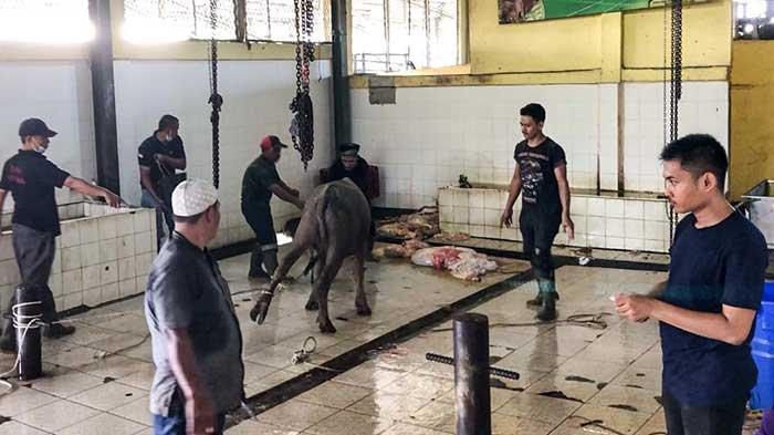 30 Ekor Hewan Kurban Dipotong di RPH Kota Jambi Selama Idul Adha 2021 Ini