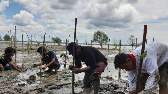 Simbol Usia Kemerdekaan RI, 75 Batang Bibit Pohon Mangrove Ditanam di Pesisir Pantai Tanjabbar