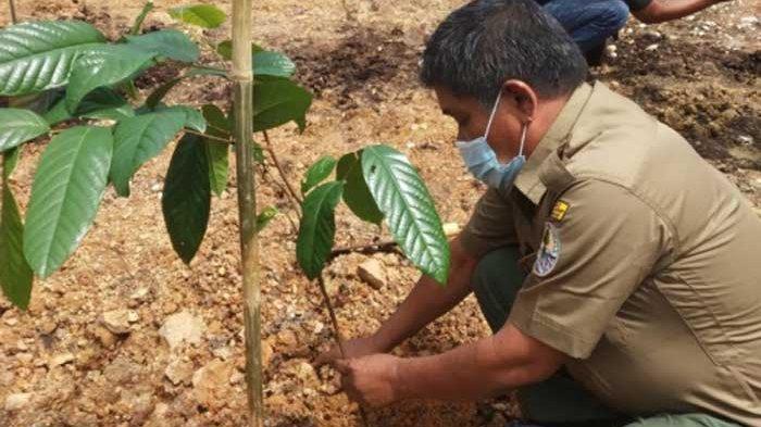 Kepala Resort Wilayah Batang Hari-BKSDA Jambi Sahat Purba menanam pohon Jenis Bulian (Eusideroxylon zwageri)