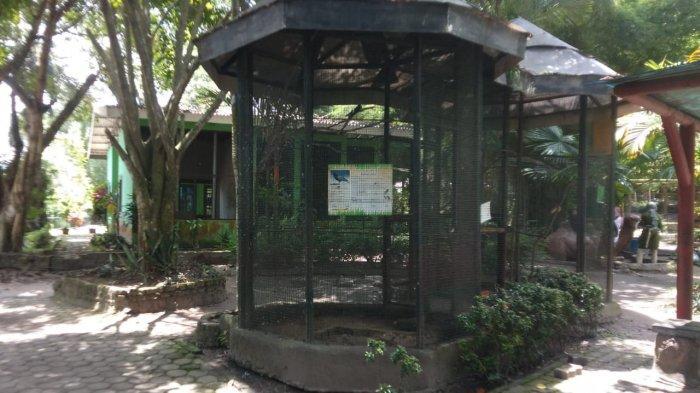 Kebun Binatang Taman Rimba Jambi Sering Gunakan Barang Bekas untuk Rehab Kandang