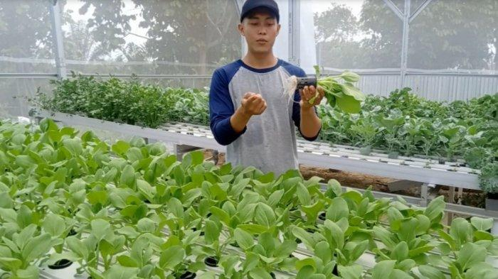 Berawal dari Terkesan, Sandi Kembangkan Pertanian Hidroponik