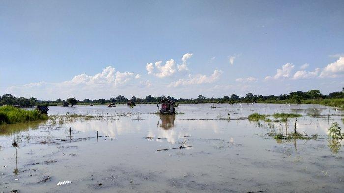 Yahya Hanya Bisa Menikmati Hasil Panen Kurang dari 50 persen Saat Banjir Kali Ini