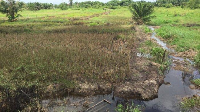 Pemkab Batanghari Dorong Pematang Umo Tinggal Menjadi Lokasi Agrowisata Unggulan