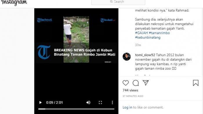 Daging Dipotong-potong, Ekor Gajah Taman Rimba Dimasukkan Truk, Petugas Bilang Sakit Jantung