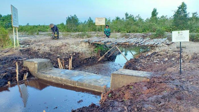 Kemarau Tiba, Upaya Perlindungan Ekosistem Gambut di Sumatera Diperkuat
