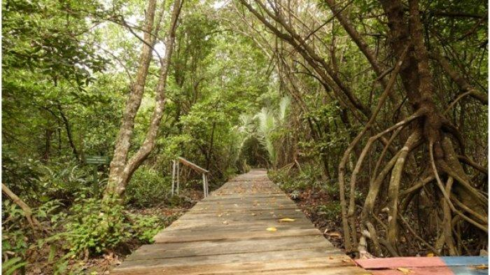 Setelah membentuk Badan Restorasi Gambut pada Januari 2016 lalu, Presiden Joko Widodo kembali menegaskan komitmennya untuk pemulihan lingkungan dengan memperpanjang BRG sekaligus menambah tugasnya untuk mempercepat rehabilitasi ekosistem mangrove.
