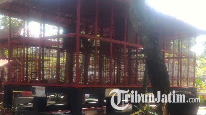 Polisi Periksa Insiden Bayi Diterkam Siamang di Blitar
