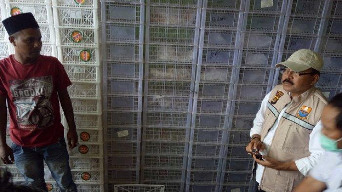 Nasir: Anggur Berasal dari China, Kami Beli di Medan