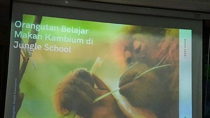 Cerita Penangkapan Sudin dan Siti Yang Mau Diselundupkan ke Jawa, Kini Diserahkan ke BKSDA Jambi