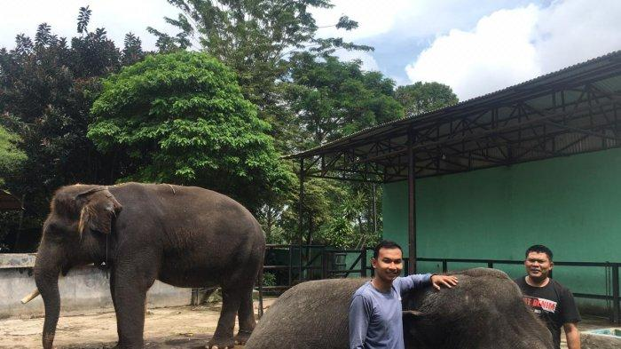 Suka Duka Sulisetiono Menjadi Pelatih Yanti dan Alfa di Taman Rimba, Sehari Sediakan 1 Ton Makanan