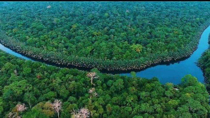 Taman Nasional Berbak Bagaikan Amazonnya Jambi dan Stok Karbon Dunia