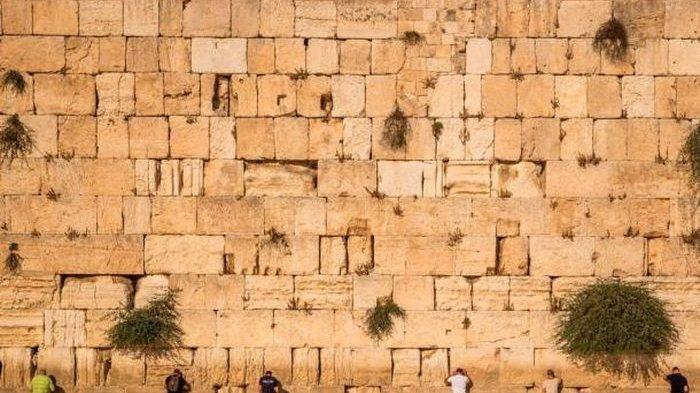 Diramalkan kiamat Datang Kalau Ular Muncul di Dinding Umat Yahudi Ini, Ada Hubungan dengan Adam Hawa