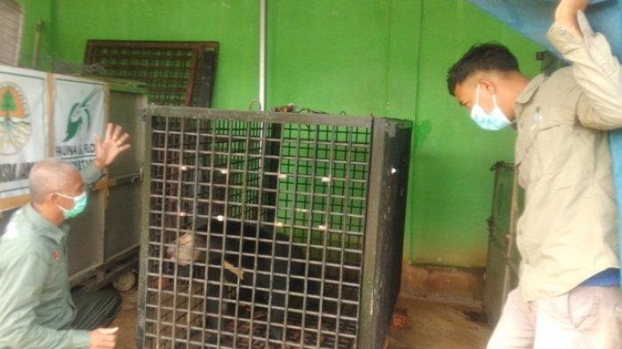 BKSDA Jambi Sudah Melepas 65 Ekor Satwa Dilindungi ke habitatnya