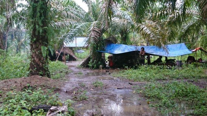 Tempat tinggal Orang Rimba di Kecamatan Pamenang, Kabupaten Merangin, Provinsi Jambi.