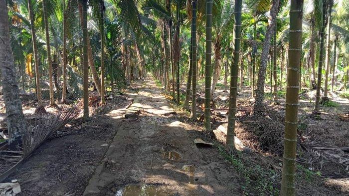 Tidak Hanya Jalan Provinsi, Jalan Penghubung Desa di Tanjabtim Juga Memprihatinkan