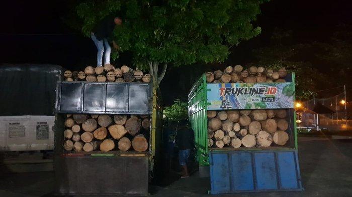 Modus Pengangkutan Kayu Ilegal yang Diungkap Polres Tebo, Hasil Ilegal Logging Ditutup Benda Ini